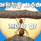 매매원칙 사수 개미 힘
