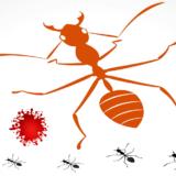 【FX 환율전망】 이란-미국 분쟁이 초래한 개미 유혈사태 원인 분석